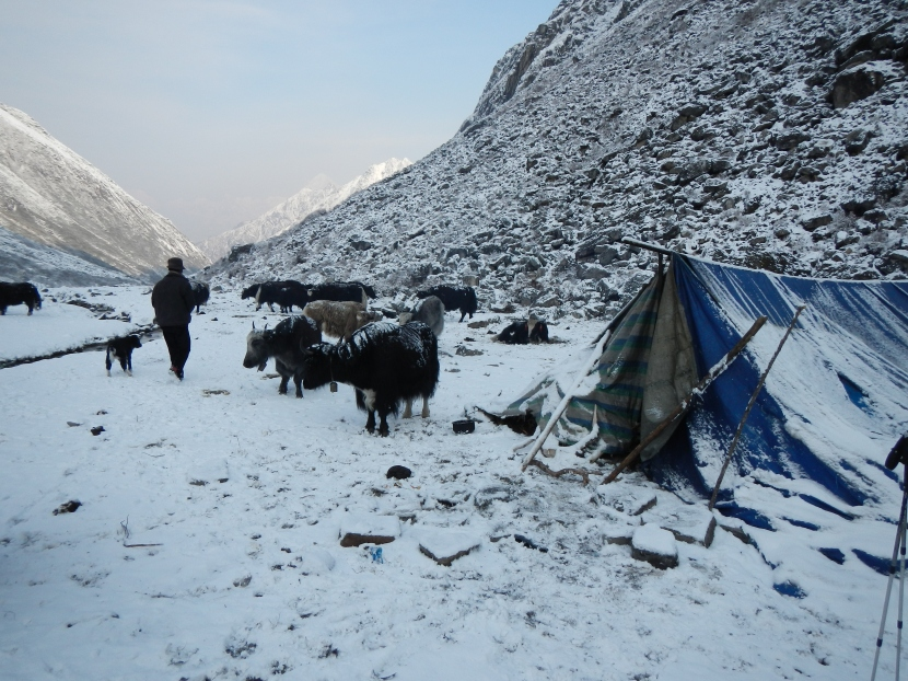 The morning after the large snow storm that caught me out as I descended from the Lumbha Sumba Pass (5130m).  This was the tent I managed to seek refuge for the night thanks to a kind yak herder.